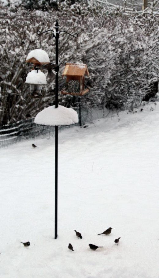Bird Feeder Pole in Winter