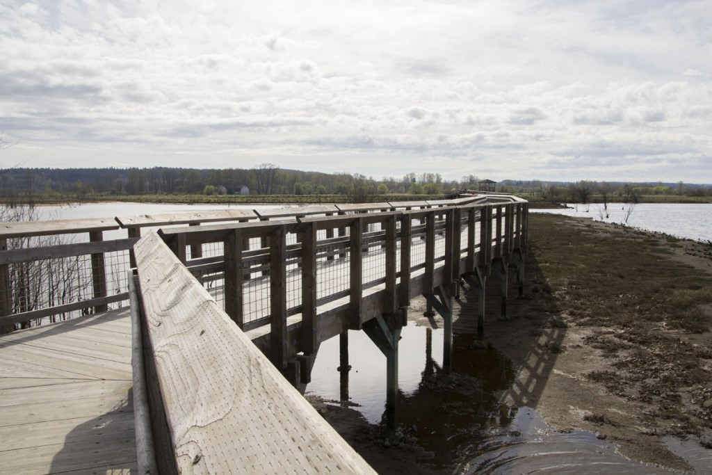 Nisqually Estuary Boardwalk Trail