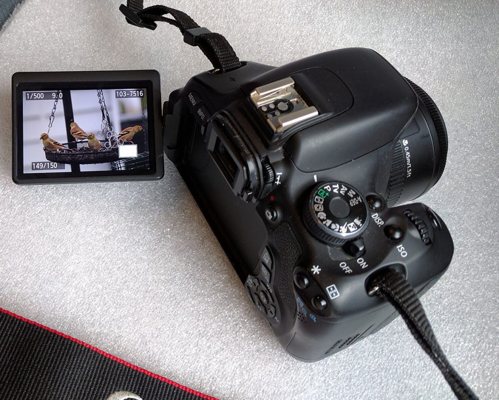 Canon EOS Rebel T3i with Fold-out screen