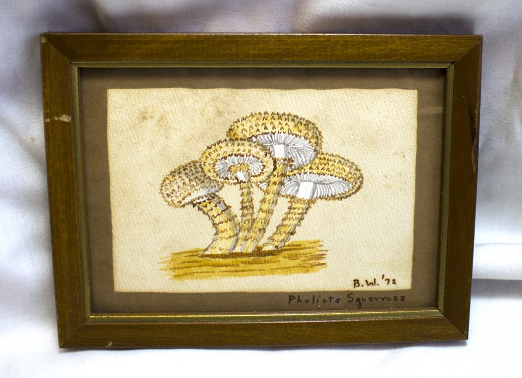 pholiota squarrosa mushroom painting by Betty Wilhelm 1972
