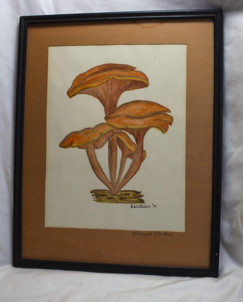 mushroom8