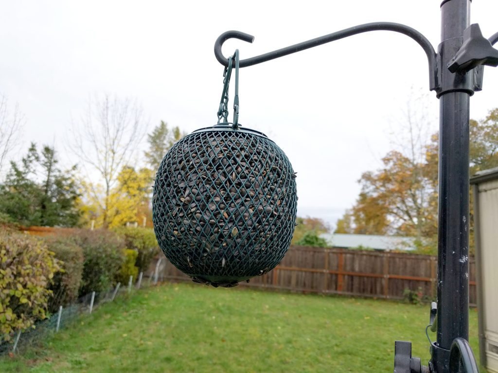 Ball Bird Feeder in my Backyard