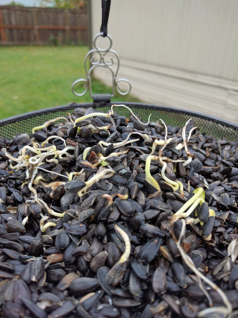 Sprouted Seeds From my Ball Bird Feeder